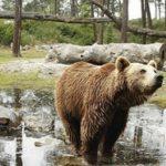 Où se loger pour visiter le zoo du bassin d'Arcachon