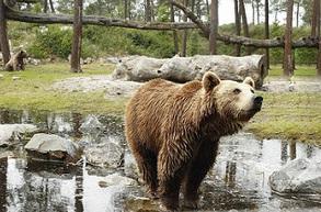 Où se loger pour visiter le zoo du bassin d'Arcachon ?