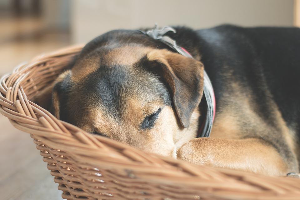 Quels facteurs considérer pour choisir le panier pour chien